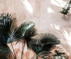palms are the print of summer! #weheartit