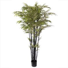 Artificial plant, 6' black bamboo