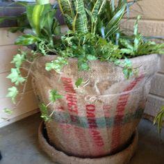 Burlap bag covered flower pot