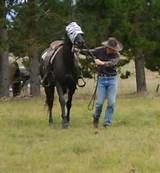 Extreme Trail Horse Obstacles |