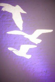 Gobo lights - the perfect projection.