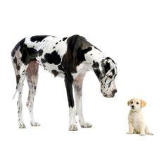 My dog is bigger than yours.    私の犬はあなたの犬より大きい。