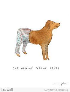 dog wearing pajama pants