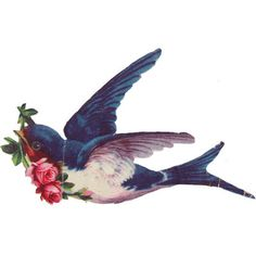 swallow with roses