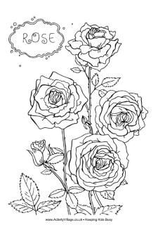 Rose Garden Coloring Pages from Rose Coloring Pages Printable. Are you looking for some rose coloring? These flowers, durable and elegant, are among our favorites. There are so many drawings of roses to print and . Rose Coloring Pages, Garden Coloring Pages, Mandala Coloring Pages, Printable Coloring Pages, Coloring Pages For Kids, Coloring Books, Colorful Garden, Colorful Flowers, Rose Flower Colors