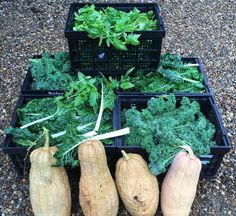 This mornings harvest picked at 5am by our family