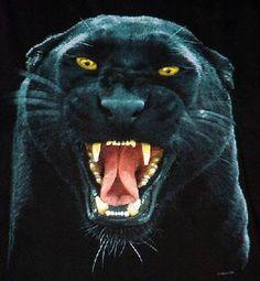 pensieri, riflessioni, amore Black Pantha, Black Panther Cat, Panther Pictures, Dangerous Animals, Angry Cat, Black Jaguar, Animal Totems, My Spirit Animal, Big Cats