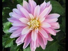 Easy, Gentle Breath Awareness Meditation by Julie Dittmar