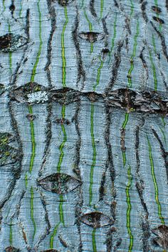 interesting tree bark  - Tree bark is always interesting to observe in your yard or garden!