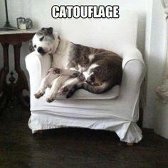 Catouflage.