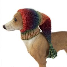 Extra small dog Snood, Orange, italian greyhound snood, whippet, small dog hat, lurcher snood, puppy clothing, dog clothes, dog accessories