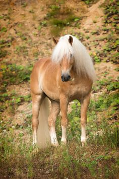"""Looks like a pony I had once """"Bit of Gold Double Grand of Clover Hill"""" We called him Grand He was the gentlest pony even though he was a stallion."""