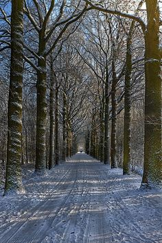 the next winter comes certainly ;-) ...#Breda, Netherlands