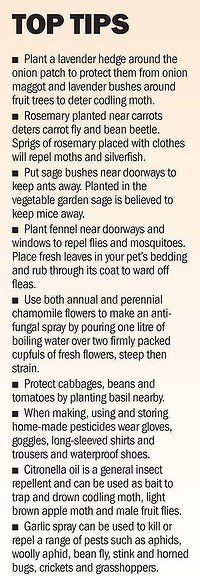 Gardening tips for natural pest control