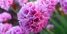 9-kerti-virag-amit-napos-helyre-is-ultethetsz-es-meg-locsolni-sem-kell Garden, Flowers, Plants, Garten, Lawn And Garden, Gardens, Plant, Gardening, Royal Icing Flowers