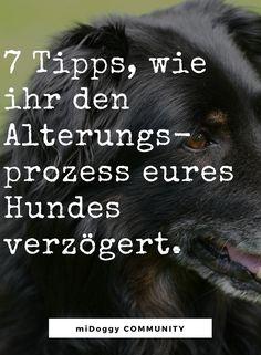 || #Hund || Ideen || #Hunde || Tipps || Tricks || Ideen || Liebe || Welpen || Bilder || Gesundheit