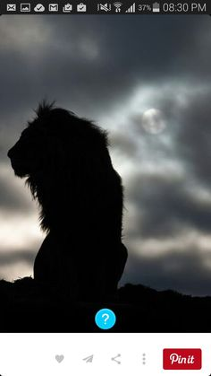 silhouette of a lion as he awaits the morning's wakeup call. The silhouette of a lion as he awaits the morning's wakeup call. Beautiful Creatures, Animals Beautiful, Beautiful Lion, Animals And Pets, Cute Animals, Wild Animals, Baby Animals, Gato Grande, Lion Love