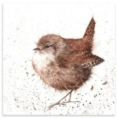 Little Jenny Wren-Wrendale Designs (Hannah Dale) Watercolor Bird, Watercolor Animals, Watercolor Paintings, Watercolor Portraits, Watercolor Landscape, Abstract Paintings, Wrendale Designs, Polychromos, Bird Pictures