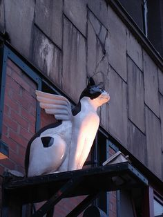 white cat with wings on top of an irish pub in budapest Storefront Signs, Cat Signs, Ragdoll Kittens, Tabby Cats, Funny Kittens, Bengal Cats, Adorable Kittens, Kitty Cats, Business Signs