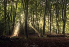 The sun said hello ina nice way this morning in the forest! Running around for a composition... Putten - the Netherlands [OC] [1200x827]