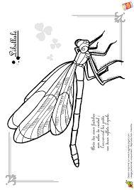 Les 34 Meilleures Images De Insectes En 2018 Insectes