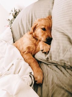 The many things I respect about the Trustworthy Golden Retriever Puppy Cute Dogs And Puppies, Baby Dogs, Doggies, Free Puppies, Cutest Dogs, Adorable Puppies, Cute Little Animals, Cute Funny Animals, Retriever Puppy