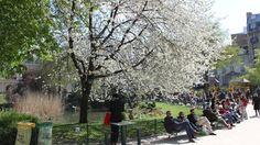 (Square du Temple / © C. Griffoulières - Time Out Paris)  64 rue de Bretagne, 3e, le plus grand parc du Marais, face à la mairie du 3e arrondissement. C'est un point de rendez-vous populaire des mamans du quartier autour du terrain de jeux pour enfants, des jeunes apéroteurs étendus sur la pelouse, des Parisiens en pause déjeuner, comme des retraités qui donnent du pain aux canards barbotant dans une petite marre aménagée avec des rochers de Fontainebleau.