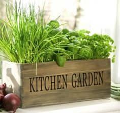 Grow a Garden from Garbage: 5 Plants to Grow from Food Scraps - OracleTalk