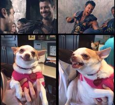 agron puppy - Twitter Search