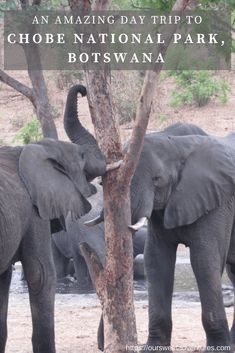 If you are visiting Victoria Falls in Zambia and Zimbabwe, you must take aday trip to Chobe National Park in Botswana. It is very easy to travel to and we highly recommend travelers to make this t…