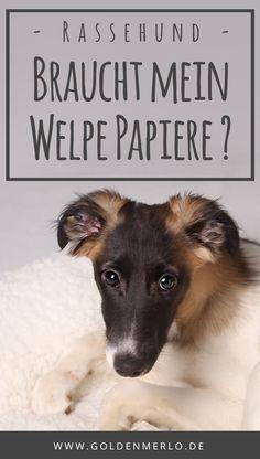 Braucht Mein Welpe Papiere Wenn Ich Selbst Nicht Zuchten Will Was Sind Papiere Uberhaupt Und Lohnt Es Sich Dafur Mehr Geld Au Welpen Welpen Mischlinge Hunde