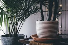 8 Indoor Plants that Purify the Air in Your Home | 1mhealthtips