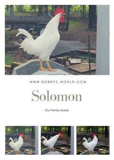 Our Family Chicken Solom
