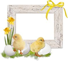 Lots of freebies today Frame Background, Background Pictures, Gift Wrapper, Easter Pictures, Frame Clipart, Borders And Frames, Writing Paper, Happy Easter, Easter Eggs