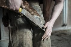 Keep your Farrier safe and happy with these tips!    http://stablemates.xyz/farrier/