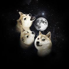 3 Doge Moon ahwoooooo! ahwooooooooooo!