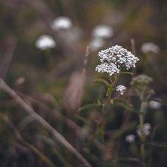 Herbal Companion Planting