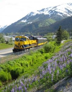 June lupines and the locomotive of the Coastal Classic Train - Full review of the Alaska Railroad's Coastal Classic Train