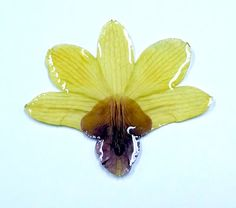 Resin coated dried orchid. This is probably my favorite idea of all since it preserves the color so well
