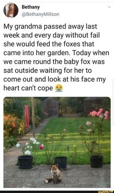 A grandma as wholesome as this family of foxes - Humor Photo - Humor images - A grandma as wholesome as this family of foxes The post A grandma as wholesome as this family of foxes appeared first on Gag Dad.