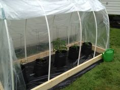 DIY Poly Tunnel~~maybe a mini greenhouse for when the frost comes.... The way the new growth is coming on some