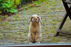 Which way to the bunny bathroom?