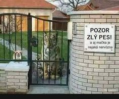 Pozor... | torpeda.cz - vtipné obrázky, vtipy a videa Phone Jokes, Cool Pictures, Funny Pictures, Fb Like, Funny Moments, Funny Things, Nice View, Funny Images, Animals And Pets