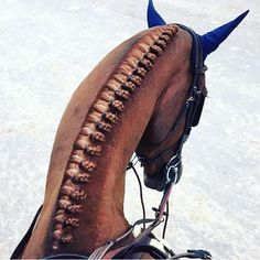 We absolutely love the plait work by so elegant and classy. What a great shot! Horse Mane Braids, Horse Hair Braiding, Pretty Horses, Horse Love, Beautiful Horses, Equestrian Outfits, Equestrian Style, Horse Grooming, Dressage Horses