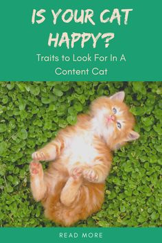 As cat lovers, we all want our cats to be happy. Not sure how to tell? In this post, we provide signs to look for that help determine your cat's happiness quotient