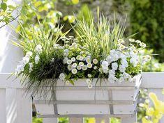 Balcony Plants, Balcony Garden, Moon Garden, Dream Garden, Container Plants, Container Gardening, Spring Flowers, White Flowers, Flower Planters