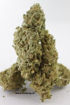 @createism Finding the right #strains can be a journey Have you tired #cannatonic B4