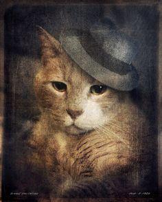 Orange Cat Photo - Animal Photography - Animal Portraits - Fedora art - Gift for Cat Lovers 8x10 Print - Vinnie Valentino