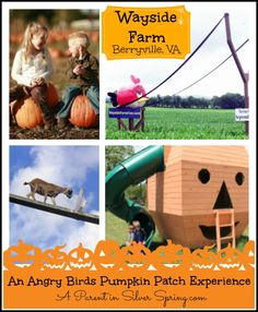 Great farm for family visits in Berryville, VA - right outside of DC.