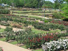 Tyler Rose Garden, Tyler, Texas 38,000 rose bushes!